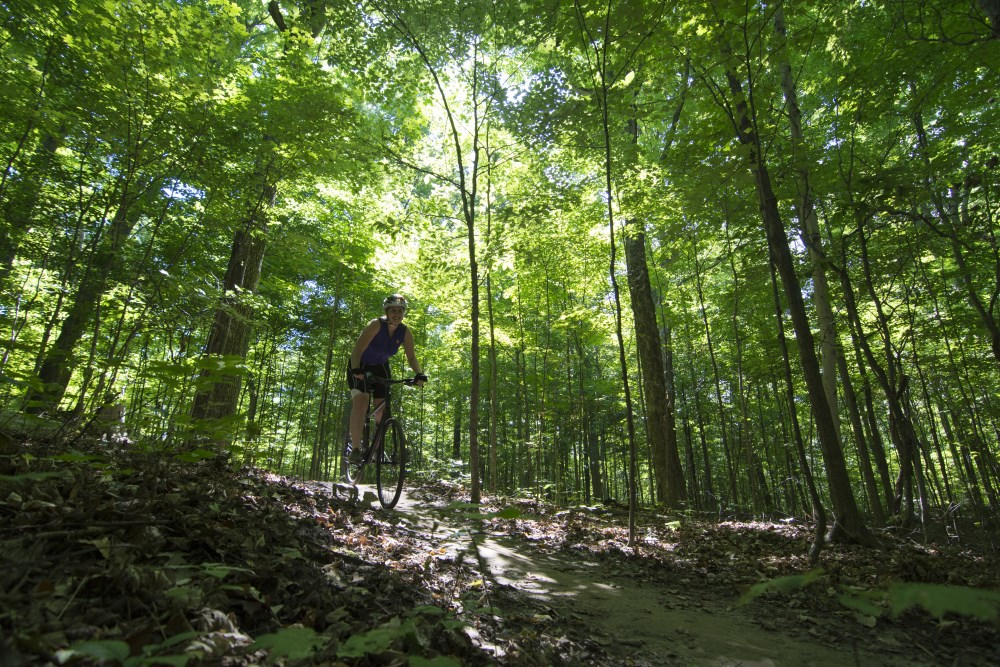 A picture of a cyclist in a forest