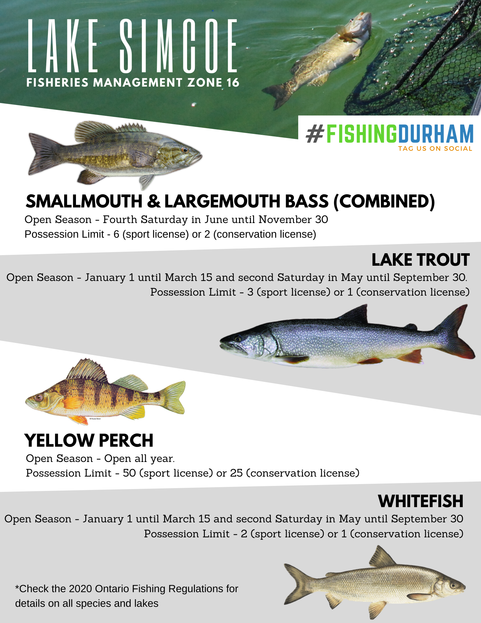 Lake Simcoe Species Information