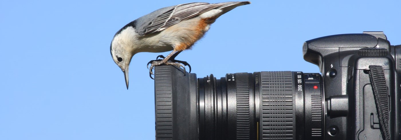 Bird sitting on camera