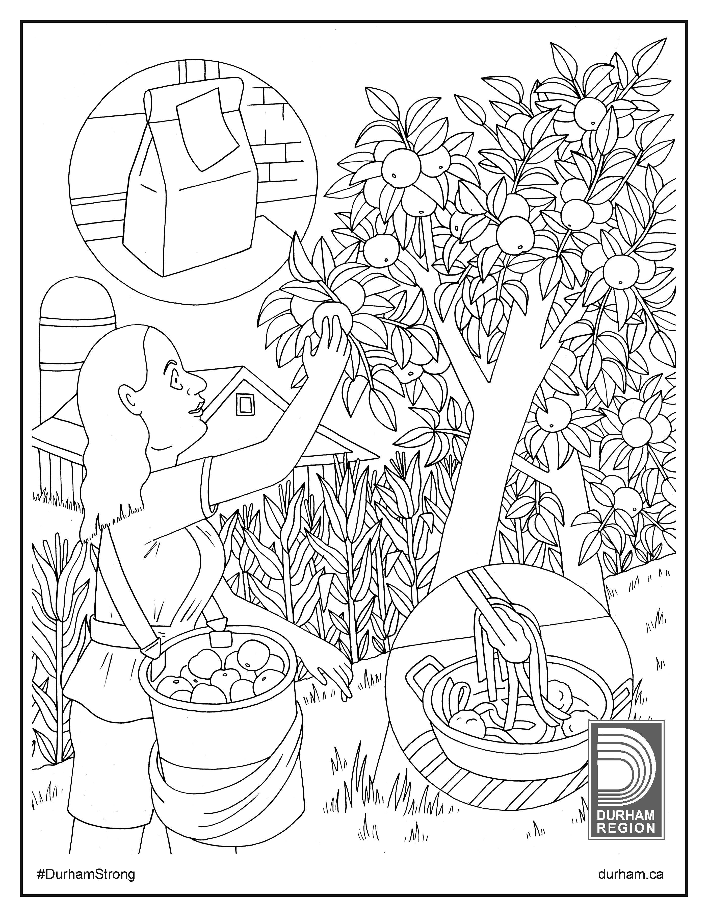 Illustration of person picking an apple from tree